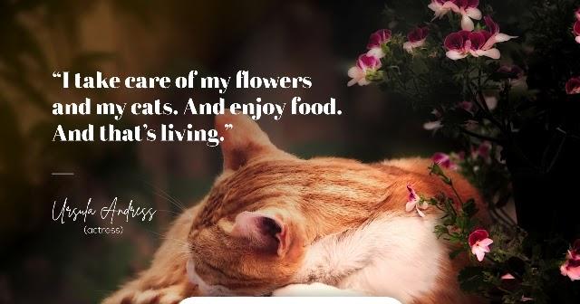 50 Quotes Bahasa Inggris About Cat Dan Artinya Ketik Surat