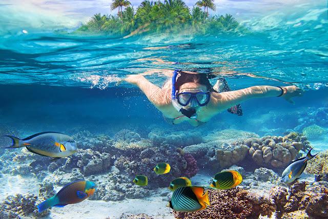Tour lặn biển ở Việt Nam có gì thú vị?