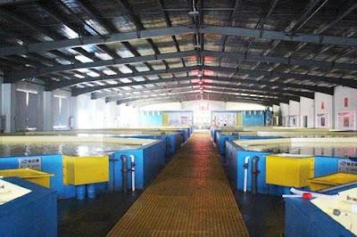 RAS Aquaculture System