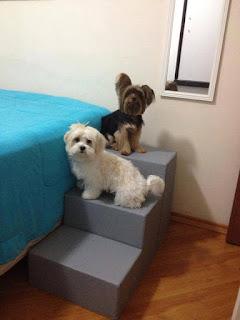 escadas para cães fisioterapia