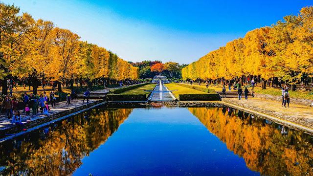 紅葉,銀杏,昭和記念公園
