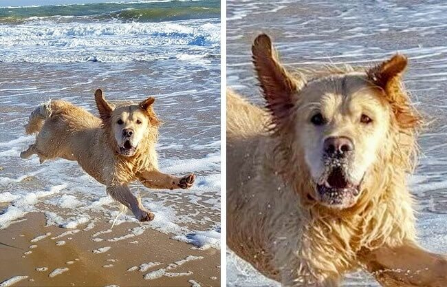 22 Photos That Utterly Capture Powerful Feelings - It seems like this dog did not expect to be captured on camera while flying over the beach.
