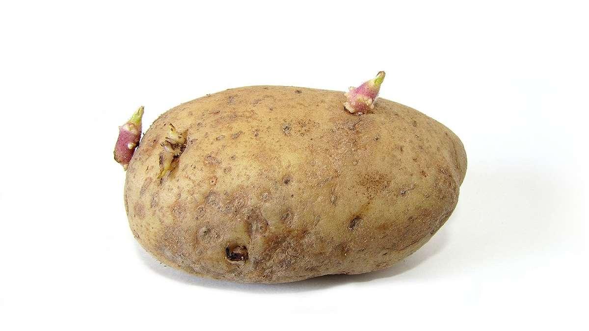 Kartoffeln Keimen Essbar
