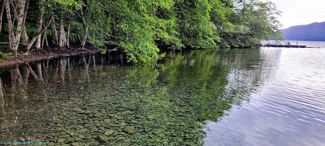 Clear water and beautiful trees at Lake Crescent