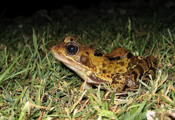Xing Fu: WHEN TOADS COME INTO OUR GARDENS