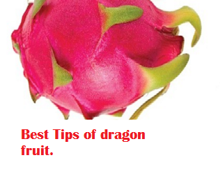 Best Tips of dragon fruit.