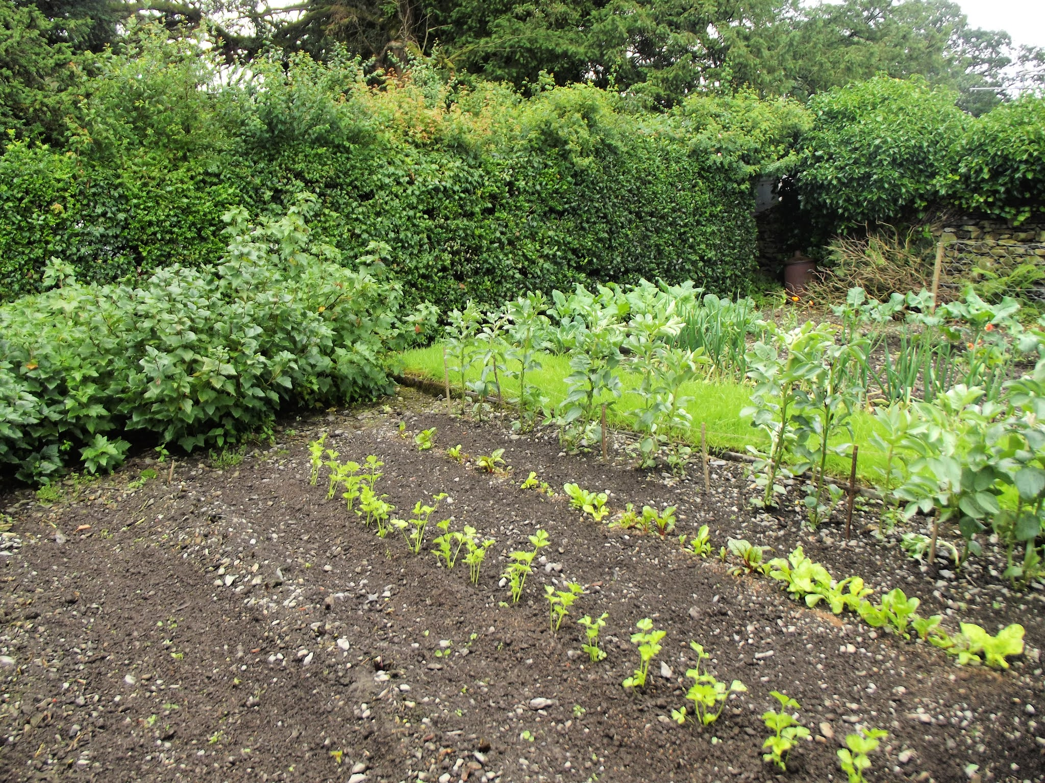 Vegetable patch at Hill Top