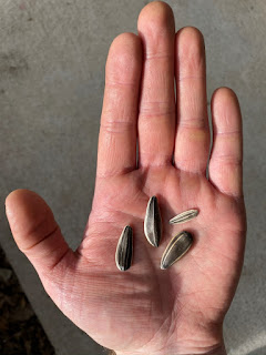 Seeds in Palm of Hand