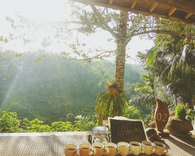 Bali pulina adalah salah satu agrowisata di Gianyar yang menyediakan tempat minum kopi