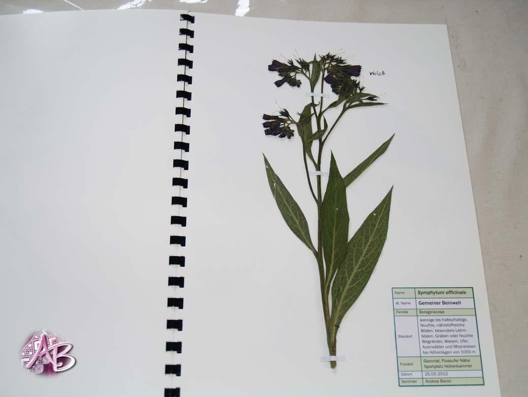 Was Ist Ein Herbarium : atelier andrea baron kleines herbarium ~ A.2002-acura-tl-radio.info Haus und Dekorationen