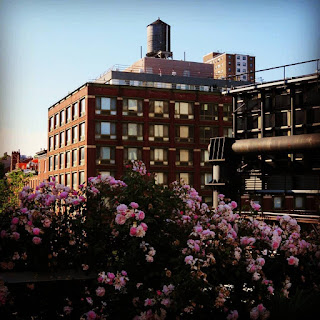 Views during a walk on the High Line in New York City