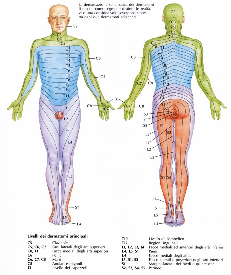 L analisi tramite esame obiettivo del dolore é un analisi estremamente  complessa 329b0d3b59f9