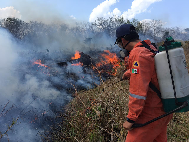 Se han registrado 359 reportes de incendios en 35 municipios: Procivy