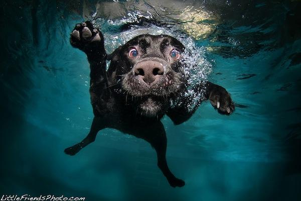 13 Funny Underwater Dog Pictures 13 Pics Amazing Creatures