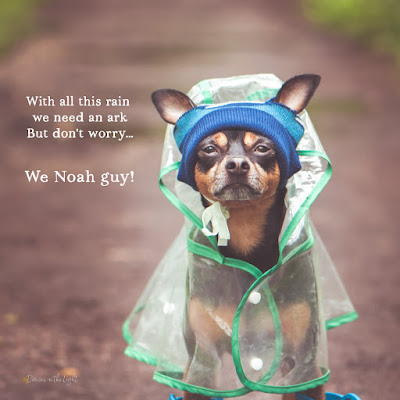 With all this rain we need an ark. But don't worry... we Noah guy!