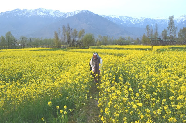 Backpacking ke kashmir