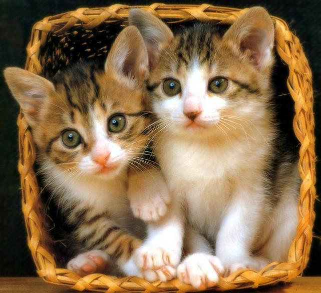 Photo de chat image de chatons imprimer - Image de chat a imprimer ...