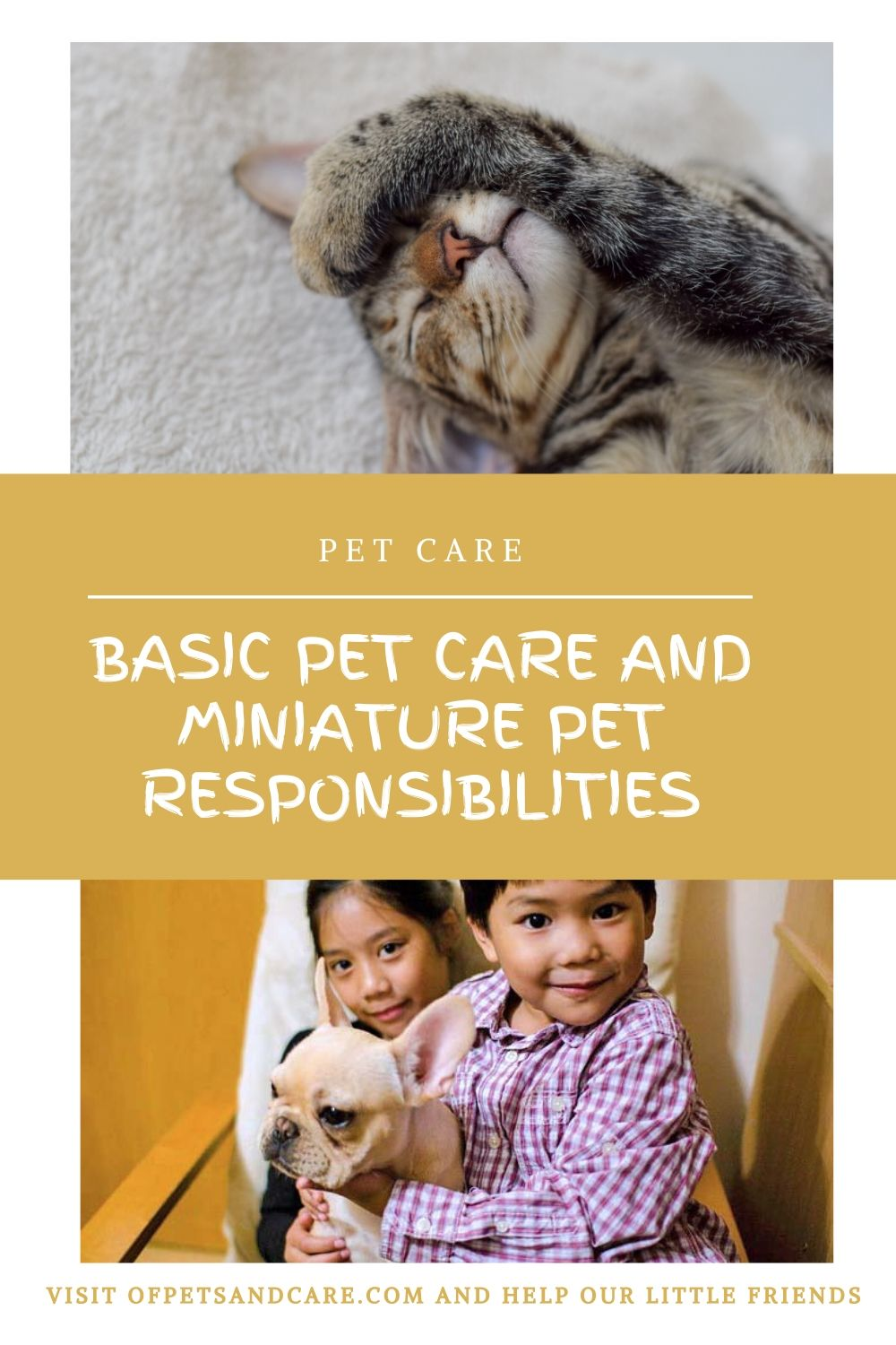 Basic Pet Care and Miniature Pet Responsibilities, kids and pets