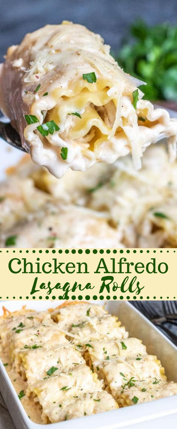 CHICKEN ALFREDO LASAGNA ROLL UPS #lasagna #chicken #dinner #easy #familydinner