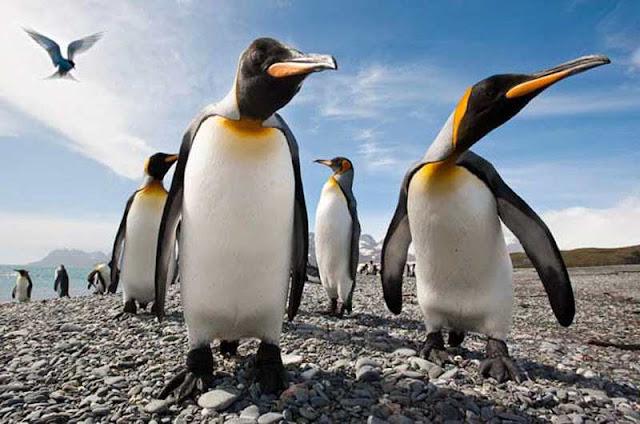 В Антарктиде два пингвина стали героями видеоролика