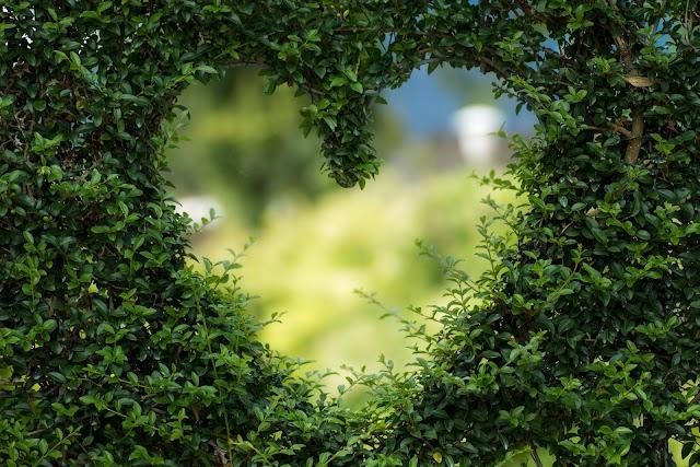 عزيزتي صاحبة القلب الأخضر