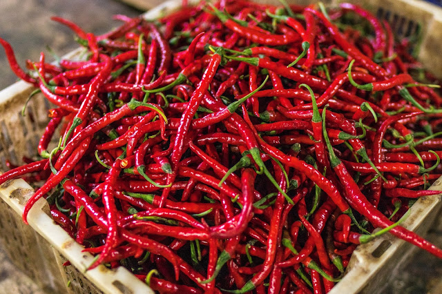 a bunch of chillies grown from fresh seeds