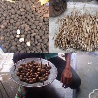 जंगल सुरक्षा व्यवस्था की खुली पोल,बाजार में धड़ल्ले से बिक रहे कटरूआ-धरती का फूल