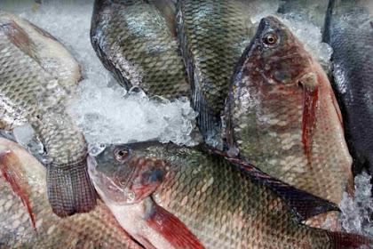 Ancaman Wabah Tilapia Lake Virus (TiLV) Pada Ikan Nila
