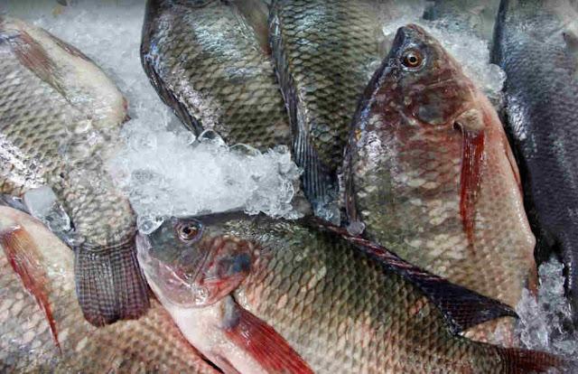 Wabah Tilapia Lake Virus