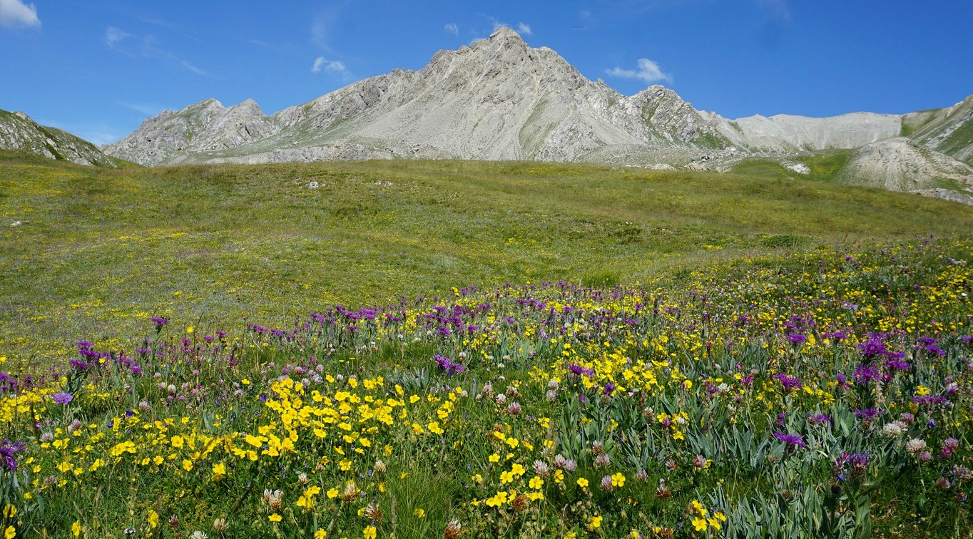 Alpine meadow above Chalets de Clapeyto