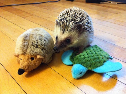 adorable animals with toy versions-11