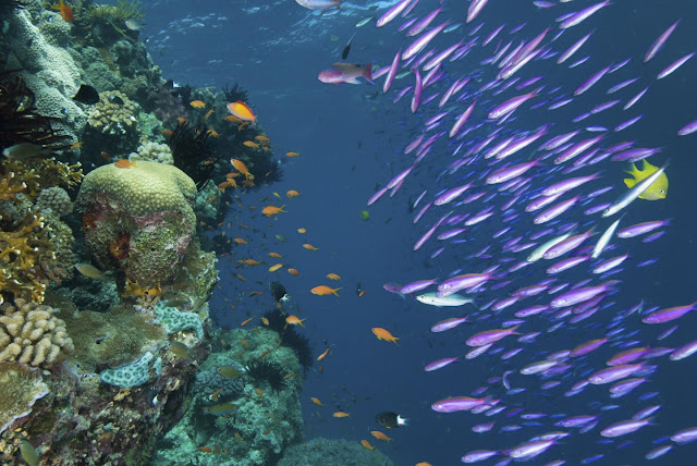 The secret behind coral reef diversity? Time, lots of time