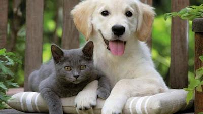 vender casa mascotas