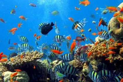Cagar Biosfer di Indonesia Ini Diakui UNESCO