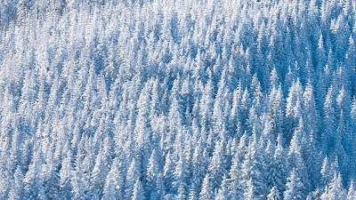 Winter Forest, Snow, Winter, Trees, Nature, Aerial view