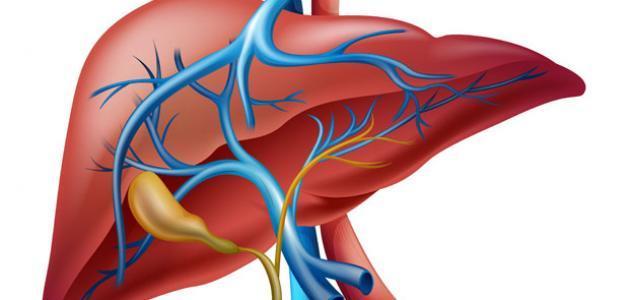 علاج تضخم الكبد وأسباب التضخم والأعراض ونصائح لمنع التضخم