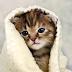 Trik Jitu : Mengobati Kucing Tidak Mau Makan.