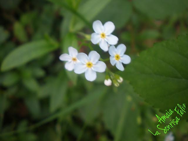 Jacinta se va encontrando florecillas por el camino y las observa con una lupa - Historias de Jacinta