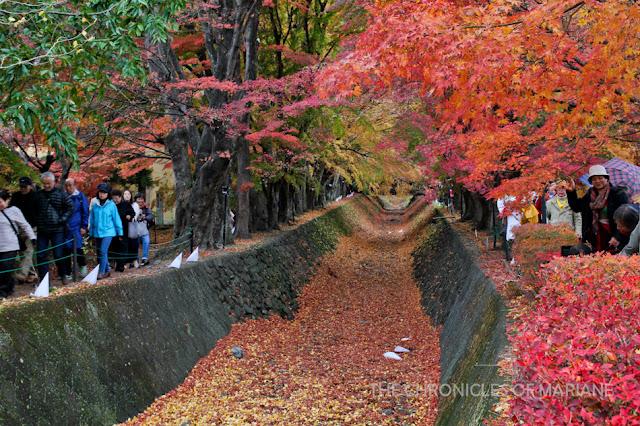 autumn festival japan