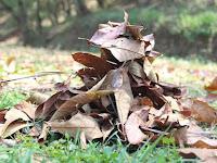 Jangan Sia-siakan! Manfaatkan Sampah Daun Kering Untuk Dijadikan Pupuk Kompos