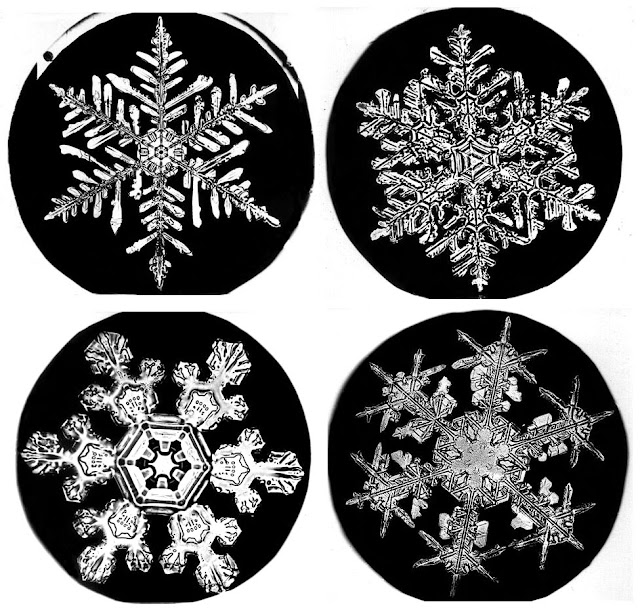 Snowflake Bentley & Winter Craft | Days of Chalk and Chocolate