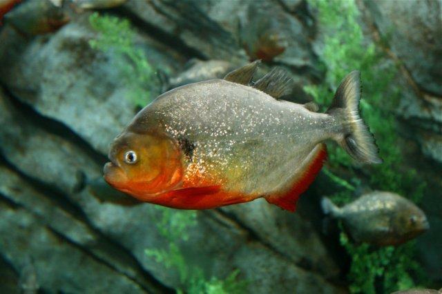 JOE'S AQUAWORLD FOR EXOTIC FISHES MUMBAI INDIA 9833898901: aquarium