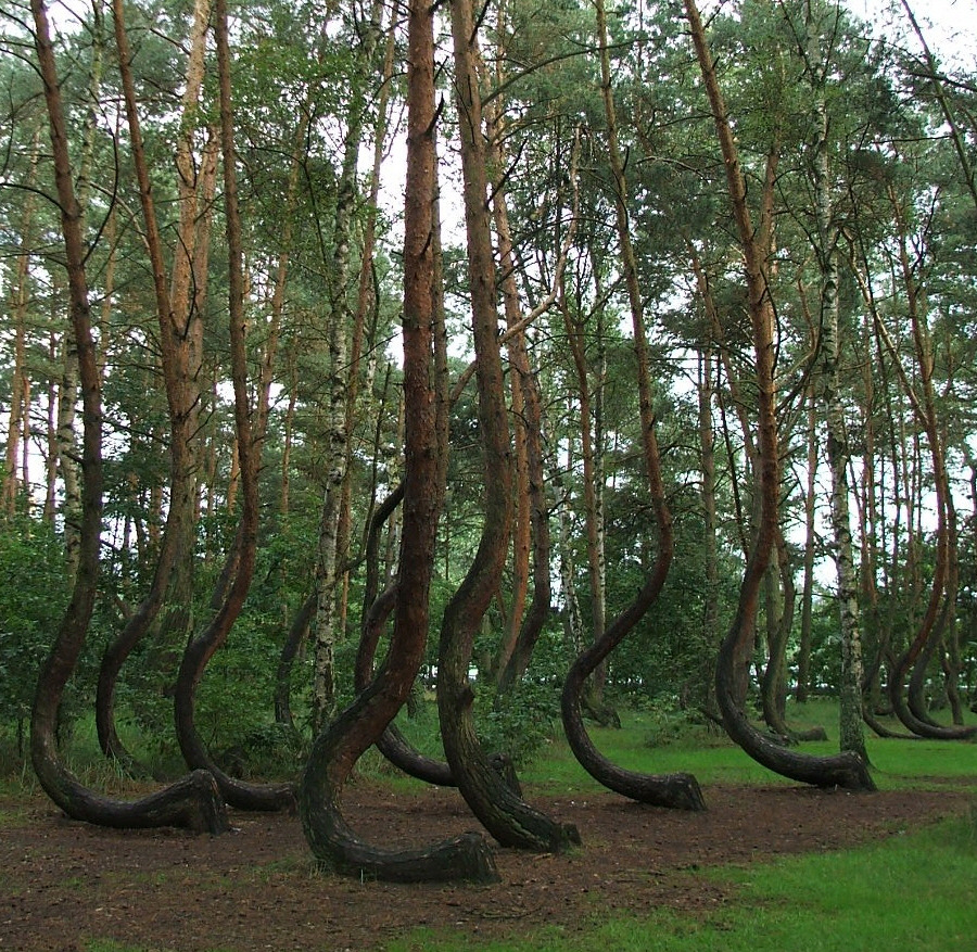 The World In Pictures: The Crooked Forest: Fantasy