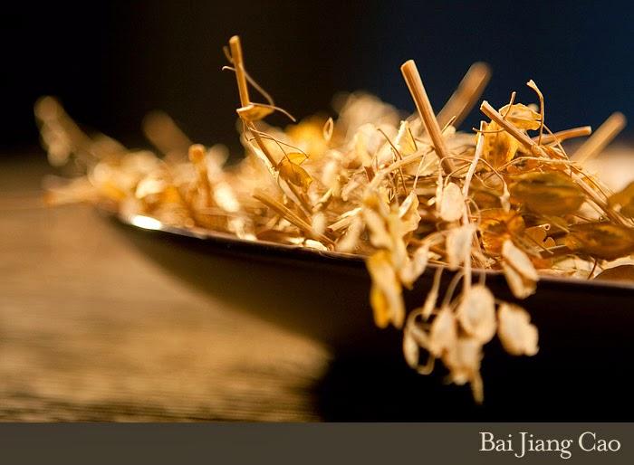Herbal ini tidak begitu dikenal di Indonesia, dalam bahasa Cina disebut Bai Jiang Cao. Merupakan familia valerianaceae. Tumbuhan ini tidak banyak dimanfaatkan untuk keperluan lain, kecuali pengobatan tradisional. Rasa herbal ini pahit, tajam dan bersuhu kecendrungan dingin. Kandungan kimia yang terdapat didalamnya adalah daucosterol, stigmasterol, beta-acdysterone, kaempferol, rutin, myrincitrin, kayaflavone, dan amenttpflavone.
