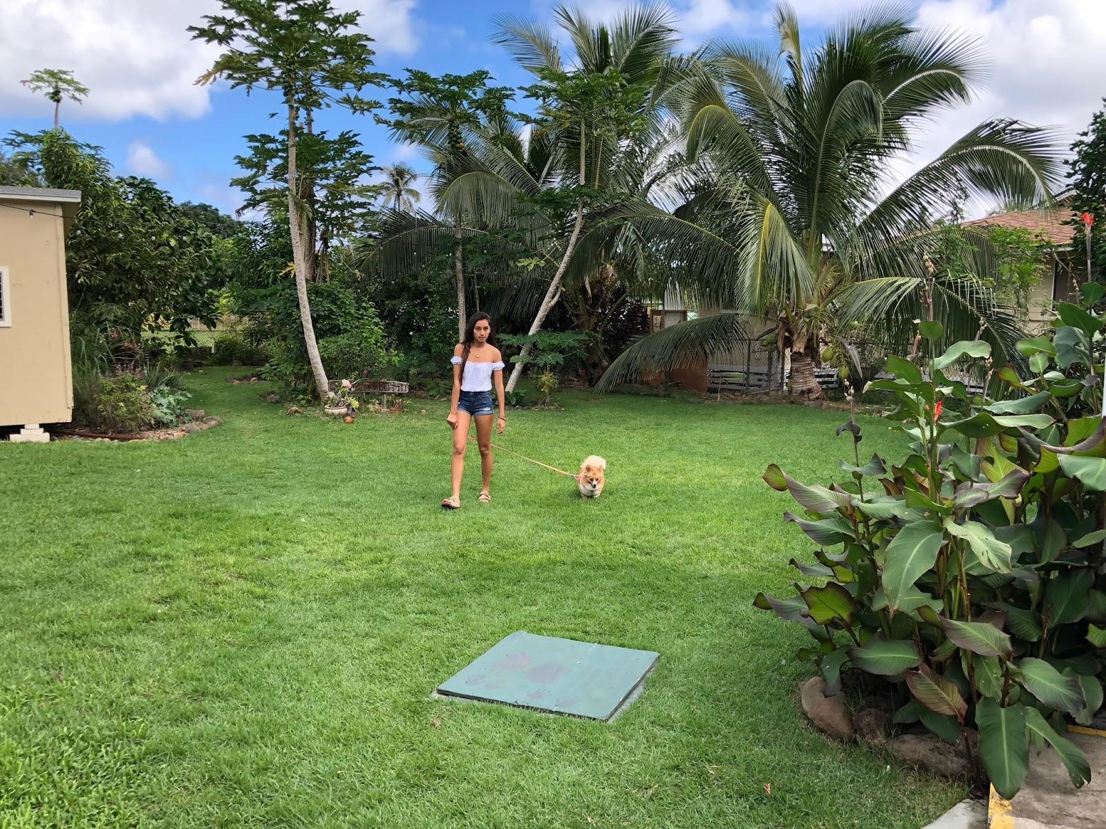 TASTE OF HAWAII: AI LOVE NALO