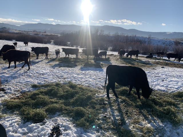 HD Wagyu Breeding Camp in Winter