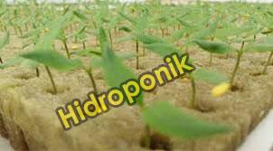Bibit Hidroponik Rockwool