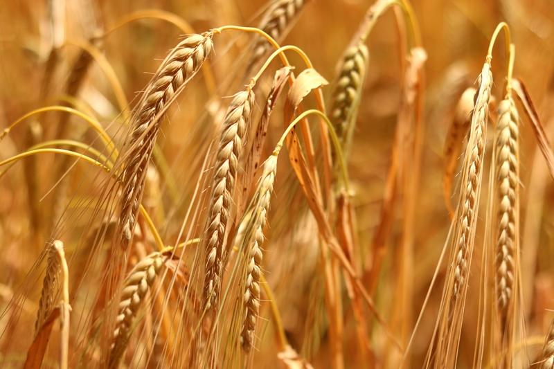 Boğaziçili akademisyenler araştırdı: Çiftçiler ne istiyor?