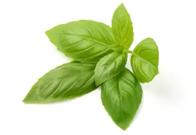 Basil (Tulsi) has the ability to fight 100 diseases.