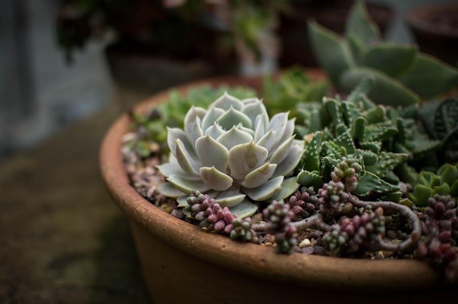 Haz tu propio sustrato para las plantas y ahorra mucho dinero